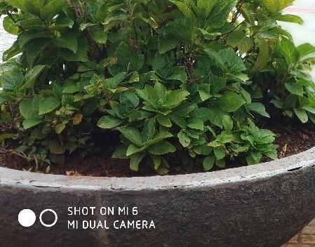 Shot On Mi Dual Camera